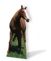 Levensgroot paard 190 cm